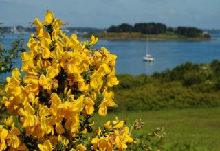 Île aux Moines - Golfe du Morbihan
