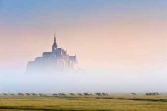 mouton et brume sur le Mont-Saint-Michel